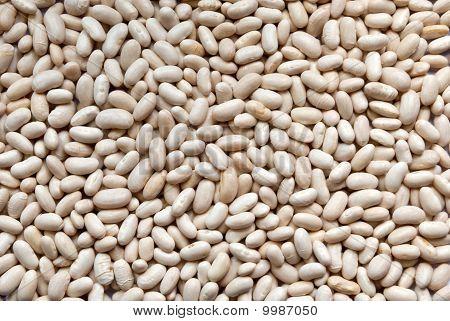 Bean Background