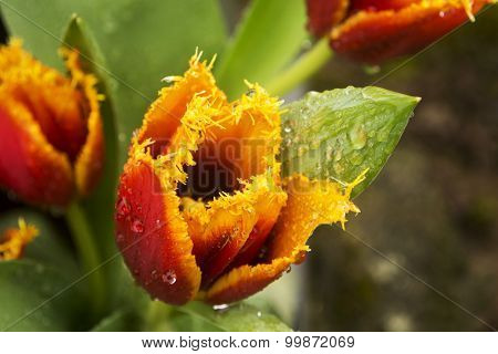 Yellow and Red Thorny Flower