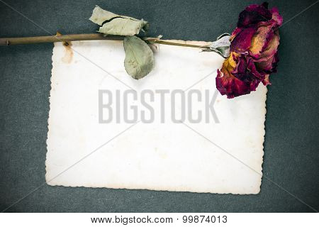 Dried red rose and blank photography