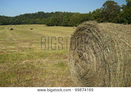 Rolls of hay on farm land