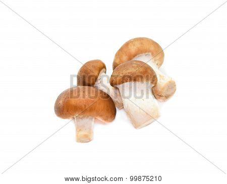 Shiitake Mushroom On The White Background