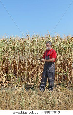 Agricultural Scene, Farmer Or Agronomist Inspect Corn Field