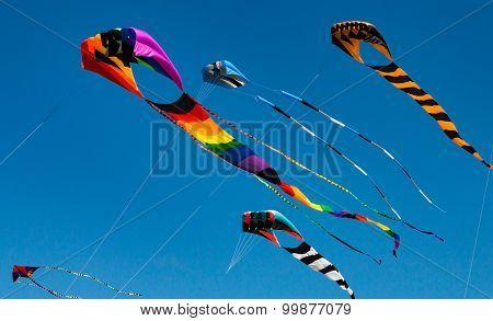 Large kites flying against blue sky
