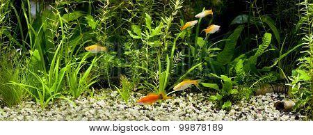 Community Fish Tank