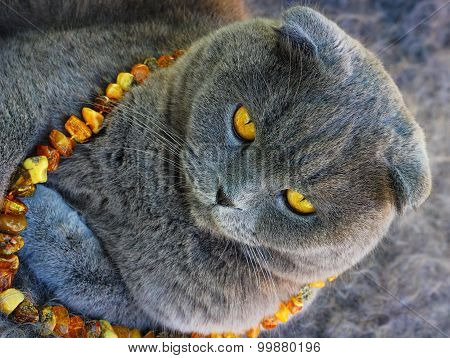 the cat in the amber beads
