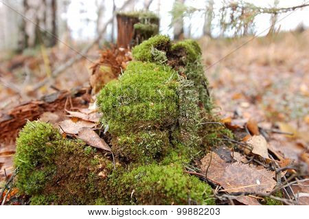 Autumn, fallen leaves and old tree stump covered with moss