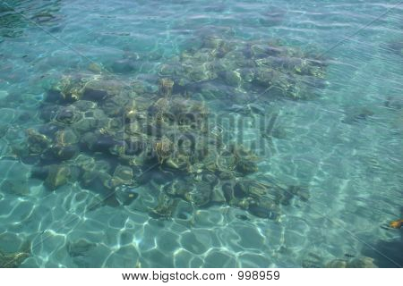Clear Coral Reef - (Background)