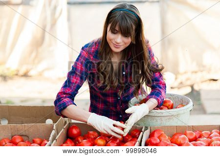 Holding tomatoes in hand and smiling.
