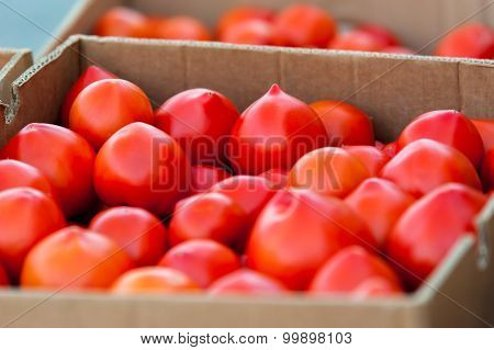 Boxes full of tomatoes