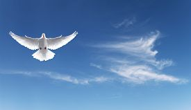 image of holy  - White Holy Dove flying in the sky panoramic view - JPG