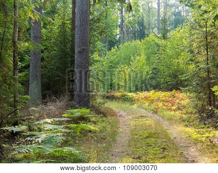 Curved Ground Road Leading Across Forest