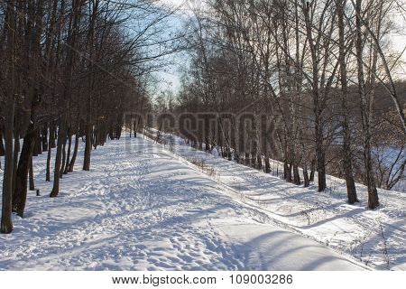 Winter Forest Under The Snow