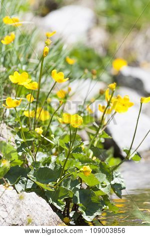 Wildflowers in the Pyrenees
