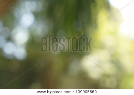 Light Blurred Background Green Lit Color Concept