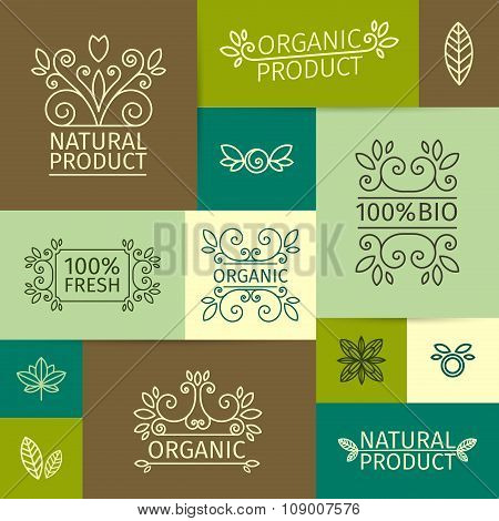Set of vintage logos, signs, posters in a linear style with swirls, leaves, branches and berries. Fo