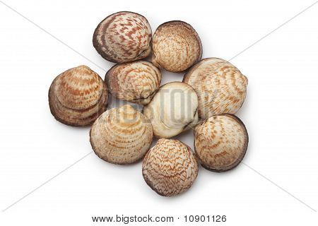 Fresh closed Dog cockles