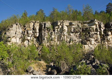Pine Forest In The Abandoned Stone Quarry