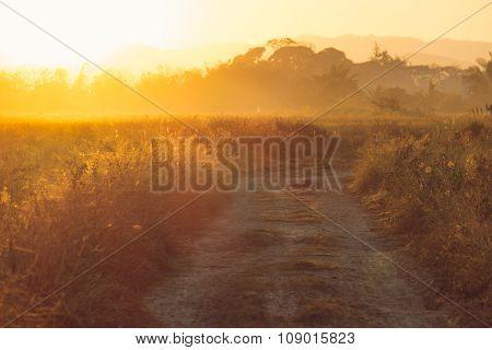 Beautiful Sunset At A Cornfield