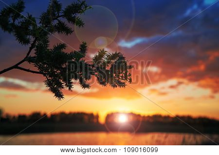 Sun behind the branch.