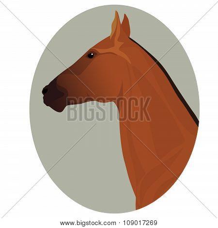Golden akhal-teke stallion portrait in the frame