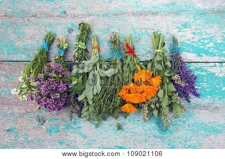 Herbs Tied In  Bundles And Hanged To Dry On Wooden  Wall