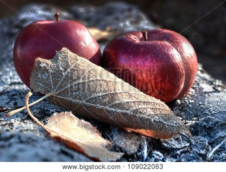 Apples and frost
