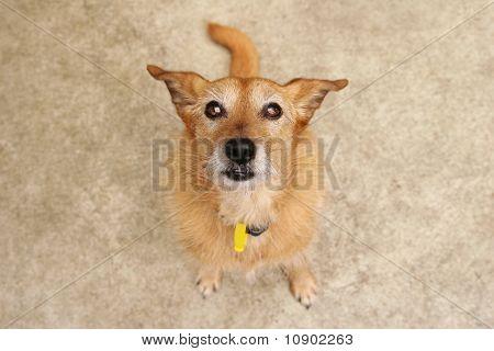 Cute scruffy dog looking up
