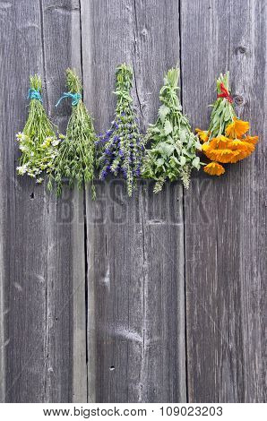 Bundles Of Fresh Medical Tied Herbs Hanging On The Wooden Wall