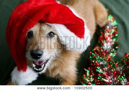 Dog in a Santa hat with a happy grin