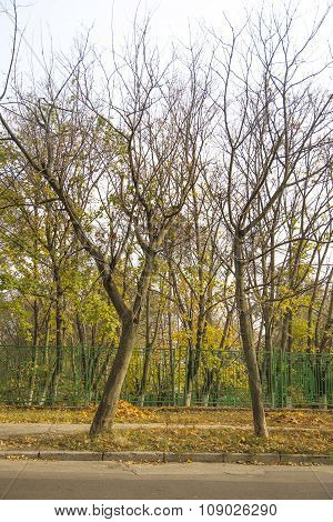 City park: leafless trees, fence along road
