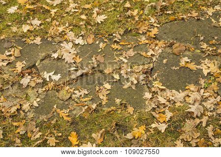 Mix of autumn leaves, grass, concrete walk in park