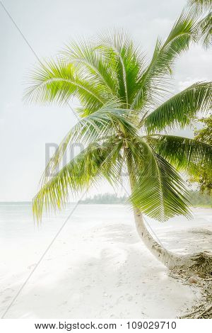Sunny Day At Amazing Tropical Beach With Palm Tree