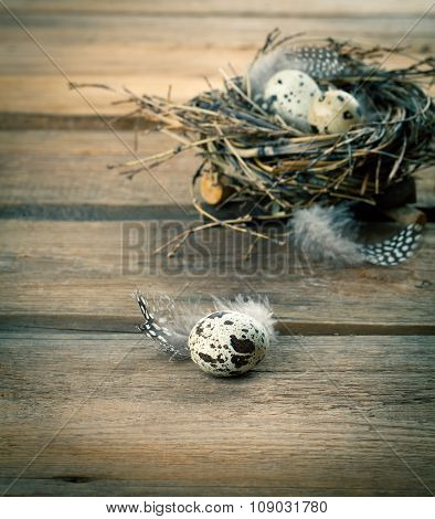 Quail Eggs With Feather On Wooden Background