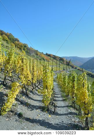 Red Wine Hiking Trail,Ahr,Germany