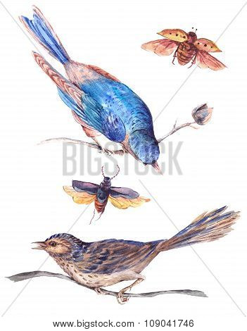 Set of watercolor separately beetles and birds on a branch