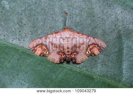 Moth On Green Leaf