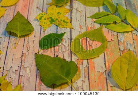 Leaves theme