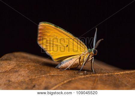 Moth On Dried Leaf