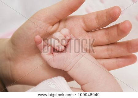 parental hand holds  the baby