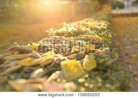 Autumn Autumn golden autumn
