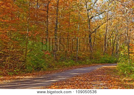 Dazzling colors of deciduous trees in autumn.