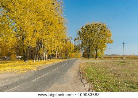 Autumnal street of small village Synivka in Sumskaya oblast Ukraine