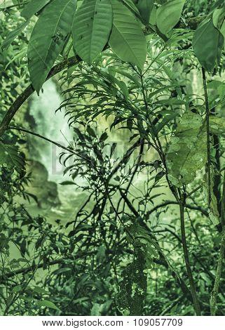 Jungle Background Detail