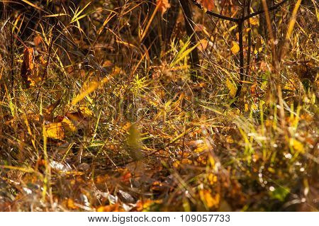 The Leaves In The Autumn Magic Forest
