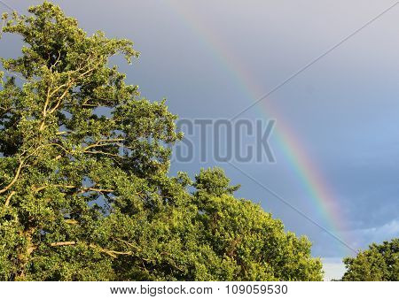 Natural Rainbow On Dark Blue Sky Above Green Forest
