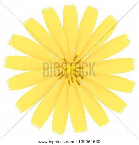 Yellow Flower. Vector