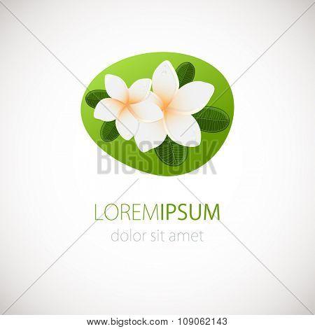 White plumeria  flower logotype.  Vector illustration of white Two Frangipani flowers with green leaves. Spa or beauty center logo.