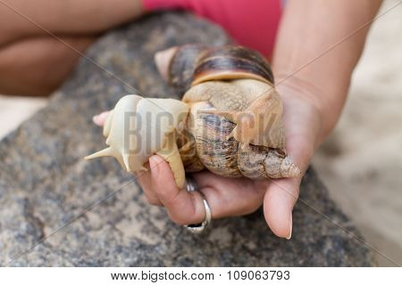 Snails in the women's hand near stone