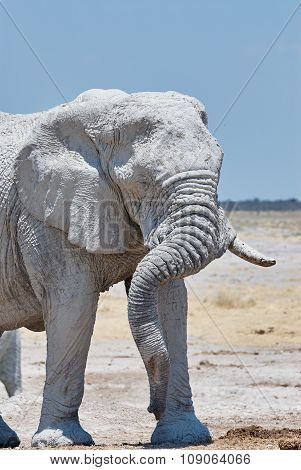 Portrait Of A Big Elephant