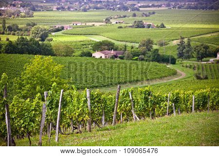 Rows Of Vineyard Fields In Southern France